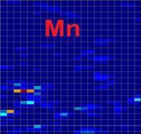 Description: Mn_71_net.JPG