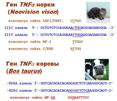 http://www.bionet.nsc.ru/files/2013/nauka/result/clip_image126.jpg