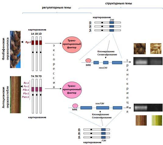 http://www.bionet.nsc.ru/files/2013/nauka/result/clip_image021.jpg