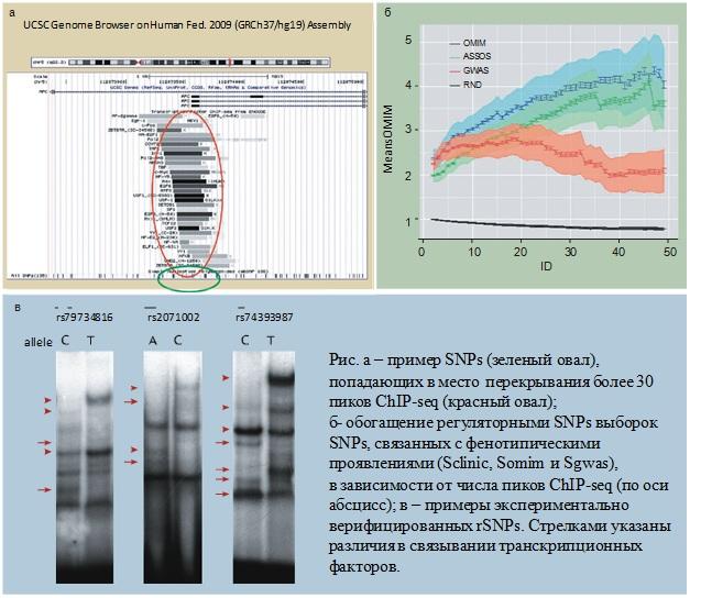 http://www.bionet.nsc.ru/files/2014/nauka/vajneyshie-rezultaty/15.jpg