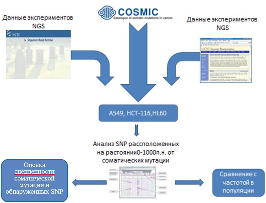 http://www.bionet.nsc.ru/files/2014/nauka/vajneyshie-rezultaty/35.jpg
