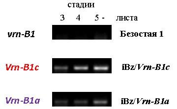 http://www.bionet.nsc.ru/files/2014/nauka/vajneyshie-rezultaty/45.jpg
