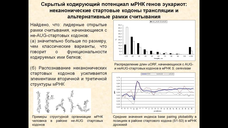 http://www.bionet.nsc.ru/files/2014/nauka/vajneyshie-rezultaty/48.jpg