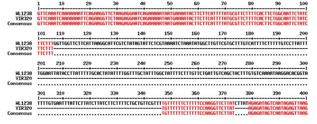http://www.bionet.nsc.ru/files/2014/nauka/vajneyshie-rezultaty/57.jpg