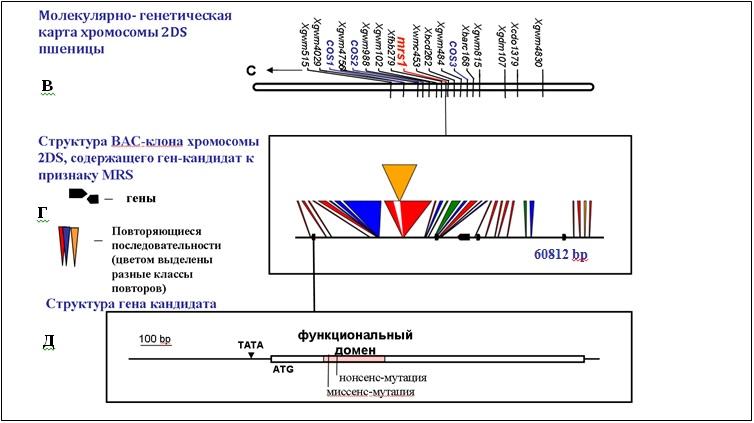 http://www.bionet.nsc.ru/files/2014/nauka/vajneyshie-rezultaty/8.jpg