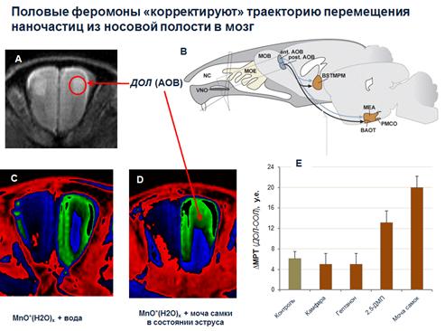 http://www.bionet.nsc.ru/files/2014/nauka/vajneyshie-rezultaty/9.png