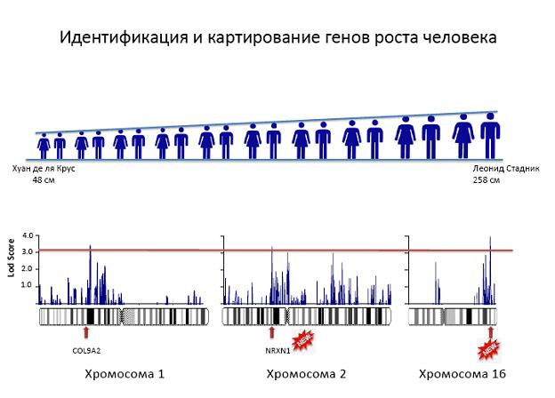 http://www.bionet.nsc.ru/images/important/1.JPG