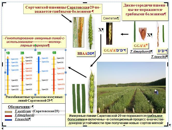 http://www.bionet.nsc.ru/images/important/2.JPG