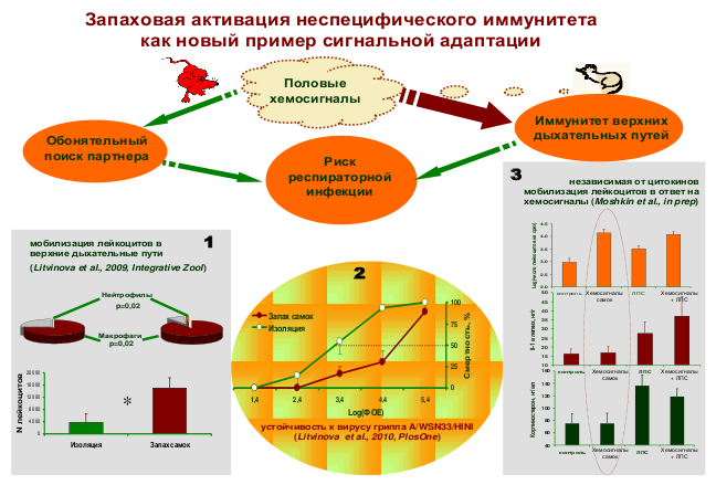 http://www.bionet.nsc.ru/images/important/55.png