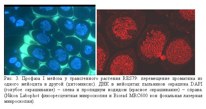 http://www.bionet.nsc.ru/images/important/result2002_p3.jpg