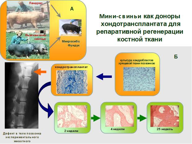 http://www.bionet.nsc.ru/images/important/untitled.jpg
