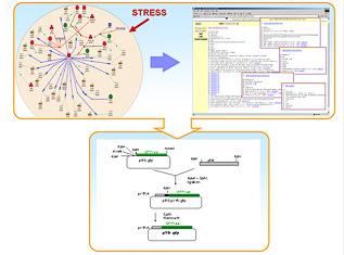 http://www.bionet.nsc.ru/images/imagesApplied/n08sm.jpg